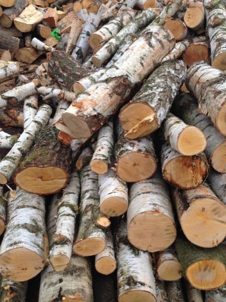 1853-krbove-drevo-ostrava.JPG