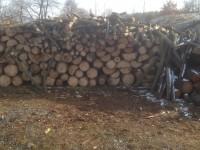Palivové dřevo :  Leština, dřevo na topení Leština, štípané dřevo Leština