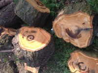 Palivové dřevo :  Libina, dřevo na topení Libina, štípané dřevo Libina