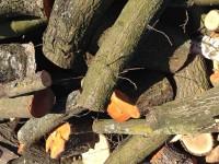 Palivé dřevo  Doloplazy, dřevo na topení Doloplazy, štípané dřevo Doloplazy