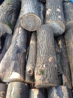 Palivé dřevo  Tršice, dřevo na topení Tršice, štípané dřevo Tršice