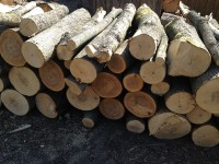 Palivé dřevo  Velký Týnec, dřevo na topení Velký Týnec, štípané dřevo Velký Týnec