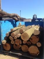 Palivé dřevo Odry, dřevo na topení Odry, štípané dřevo Odry