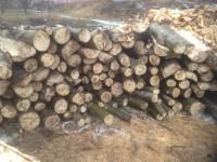 Palivové Dřevo Krasov, Štípané Dřevo Krasov, Dřevo na topení Krasov