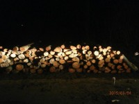 Palivové dřevo Janov, dřevo na topení Janov, štípané dřevo Janov.