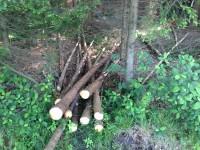 Palivové dřevo Píšť, dřevo na topení Píšť, štípané dřevo Píšť.