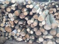 Palivové dřevo Košařiska, dřevo na topení Košařiska, štípané dřevo Košařiska