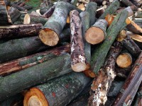 Palivové dřevo :  Dětmarovice, dřevo na topení Dětmarovice, štípané dřevo Dětmarovice
