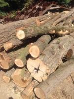 Palivové dřevo :  Zbyslavice, dřevo na topení Zbyslavice, štípané dřevo Zbyslavice