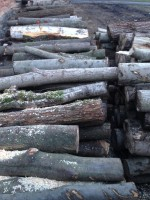 Palivové dřevo :  Tichá, dřevo na topení Tichá, štípané dřevo Tichá