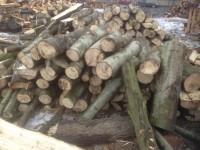 Palivové dřevo Pstruží, dřevo na topení Pstruží, štípané dřevo Pstruží