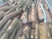 Palivové dřevo Pražmo, dřevo na topení Pražmo, štípané dřevo Pražmo