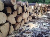 Palivové dřevo Písečná, dřevo na topení Písečná, štípané dřevo Písečná
