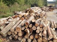Palivové dřevo Nošovice, dřevo na topení Nošovice, štípané dřevo Nošovice