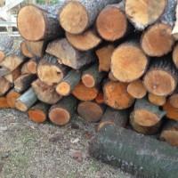 Palivové dřevo :  Hradec-Nová Ves, dřevo na topení Hradec-Nová Ves, štípané dřevo Hradec-Nová Ves