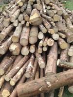 Palivové dřevo :  Uhelná, dřevo na topení Uhelná, štípané dřevo Uhelná