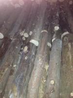 Palivové dřevo :  Velké Kunětice, dřevo na topení Velké Kunětice, štípané dřevo Velké Kunětice