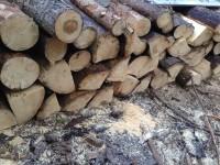 Palivové dřevo :  Vlčice, dřevo na topení Velké Vlčice, štípané dřevo Vlčice