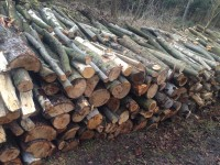 Palivové dřevo :  Bohdíkov, dřevo na topení Bohdíkov, štípané dřevo Bohdíkov