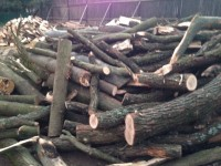 Palivové dřevo :  Dlouhomilov, dřevo na topení Dlouhomilov, štípané dřevo Dlouhomilov
