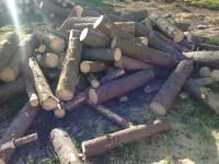 Palivové dřevo :  Kopřivná, dřevo na topení Kopřivná, štípané dřevo Kopřivná