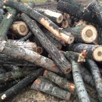 Palivové dřevo :  Petrov nad Desnou, dřevo na topení Petrov nad Desnou, štípané dřevo Petrov nad Desnou