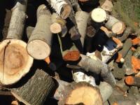 Palivové dřevo :  Postřelmůvek, dřevo na topení Postřelmůvek, štípané dřevo Postřelmůvek