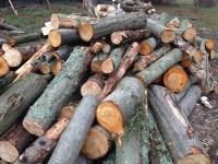Palivové dřevo :  Velké Losiny, dřevo na topení Velké Losiny, štípané dřevo Velké Losiny