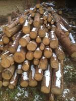 Palivové dřevo :  Stražisko, dřevo na topení Stražisko, štípané dřevo Stražisko