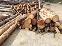 Palivové dřevo :  Dobrčice, dřevo na topení Dobrčice, štípané dřevo Dobrčice