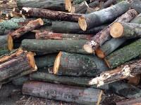 Palivé dřevo  Lobodice, dřevo na topení Lobodice, štípané dřevo Lobodice