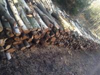 Palivé dřevo  Říkovice, dřevo na topení Říkovice, štípané dřevo Říkovice