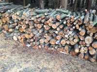 Palivé dřevo  Žákovice, dřevo na topení Žákovice, štípané dřevo Žákovice