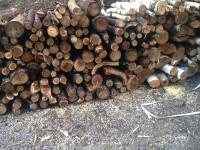 Palivé dřevo  Bělkovice-Lašťany, dřevo na topení Bělkovice-Lašťany, štípané dřevo Bělkovice-Lašťany