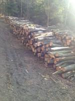 Palivé dřevo  Bílá Lhota, dřevo na topení Bílá Lhota, štípané dřevo  Bílá Lhota