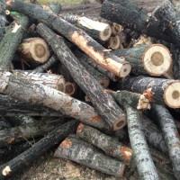 Palivé dřevo  Bouzov, dřevo na topení Bouzov, štípané dřevo  Bouzov