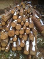 Palivé dřevo  :  Lužice, dřevo na topení Lužice, štípané dřevo Lužice