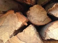 Palivé dřevo  Troubelice, dřevo na topení Troubelice, štípané dřevo Troubelice