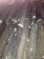Palivé dřevo  Velká Bystřice, dřevo na topení Velká Bystřice, štípané dřevo Velká Bystřice