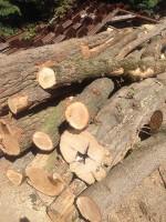 Palivé dřevo  Velký Újezd, dřevo na topení Velký Újezd , štípané dřevo Velký Újezd