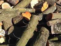 Palivé dřevo  Vilémov, dřevo na topení Vilémov, štípané dřevo Vilémov