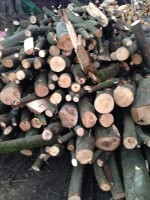 Palivové dřevo Olomouc