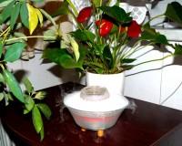 Mlhová fontána LS - 2913 – s antiseptickými účinky v době chřipek do bytu a kanceláří.