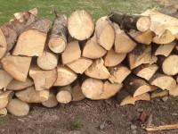 695-smrkove-drevo-ostrava.JPG