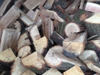 698-krbove-drevo-ostrava.JPG